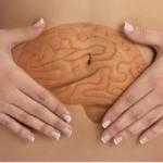 Le lien cerveau-intestin